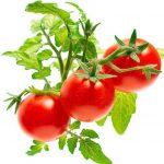 Посадка томатов на рассаду в 2021 году благоприятные дни