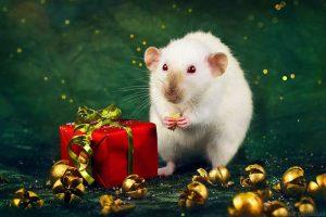 Приметы на Новый Год 2020 Крысы чтобы забеременеть
