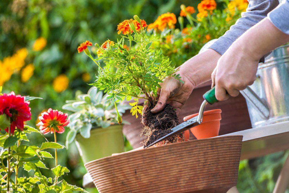 Лунный календарь на август 2020 года садовода и огородника таблица