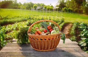Лунный календарь на август 2021 года садовода и огородника таблица