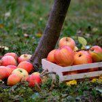 Лунный календарь на сентябрь 2021 года садовода и огородника таблица