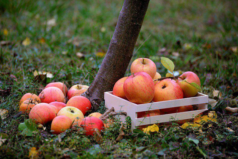 Лунный календарь на сентябрь 2020 года садовода и огородника таблица